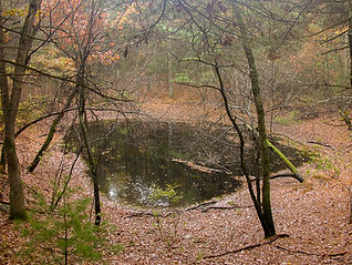 Vernal Pool - Fall