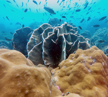 One of the many hard corals