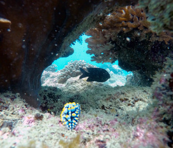Phu Quoc is famous for nudibranchs