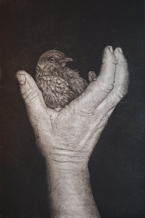 Bird in the Hand - Icing Sugar Aquatint