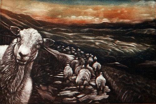 Welsh Mountain Sheep - Faux Mezzotint