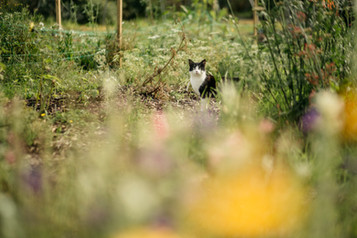 Roggie, previously known as Rodger, the flower patch cat.