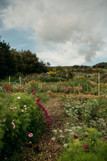 The flower patch at Hollow Meadows Flowers, where all our flowers are grown and picked.