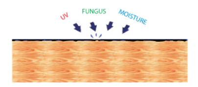 UV-fungus-Moisture.png