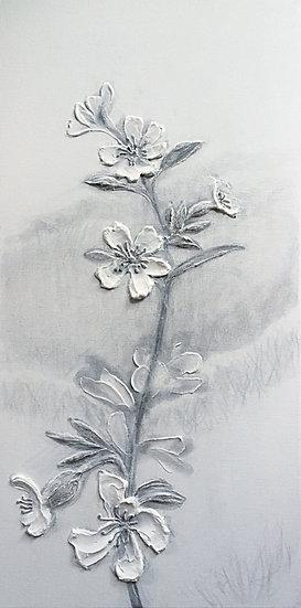 Silene Viscaria (sticky catchfly)
