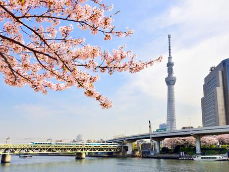 桜シーズン到来!!