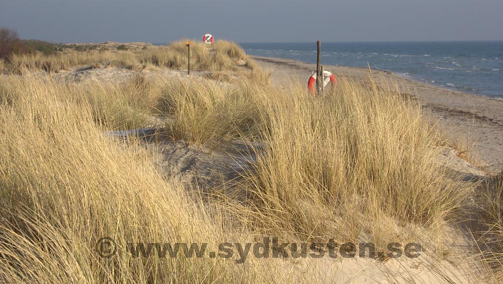 Njut av Sandhammaren en solig vinter dag på den skånska Sydkusten!