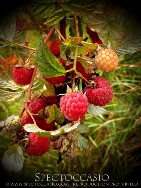 Sydkusten Skåne Gunnebo Trädgård Tema frukt och bär