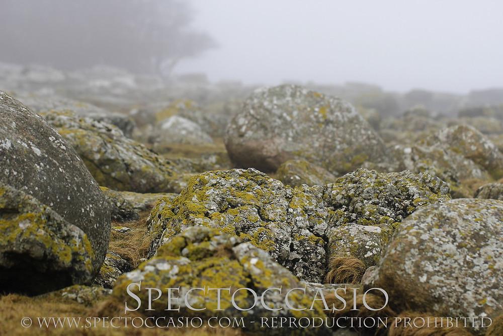 Sydkusten Skåne - njut av stranden vid Baskemölla under stilla dimmiga januari dagar!