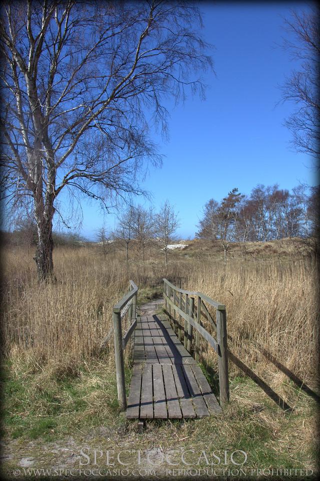 Sydkusten Skåne vandra på vita stränder Hagestad naturreservat Sandhammaren