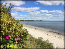 Sydkusten Skåne Mossbystrand strand