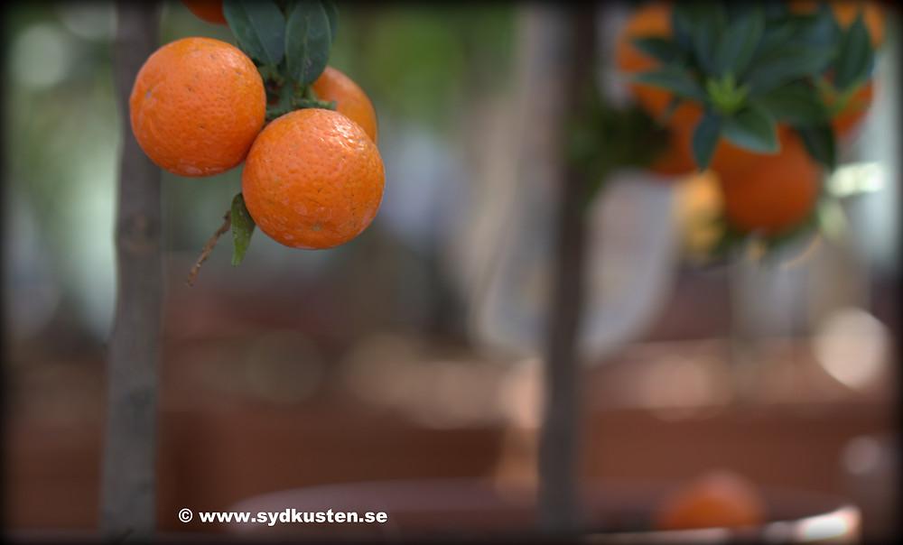 Sydkusten Gunnebo garden event Mediterranean plants