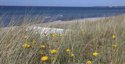 Sydkusten Skåne strand