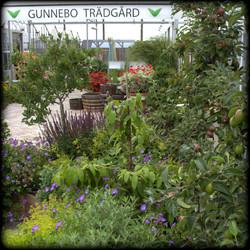 Sydkusten Skåne Gunnebo Trädgård