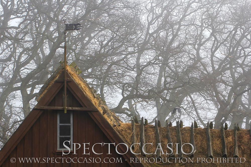 Sydkusten Skåne - njut av naturen under stilla dimmiga januari dagar!