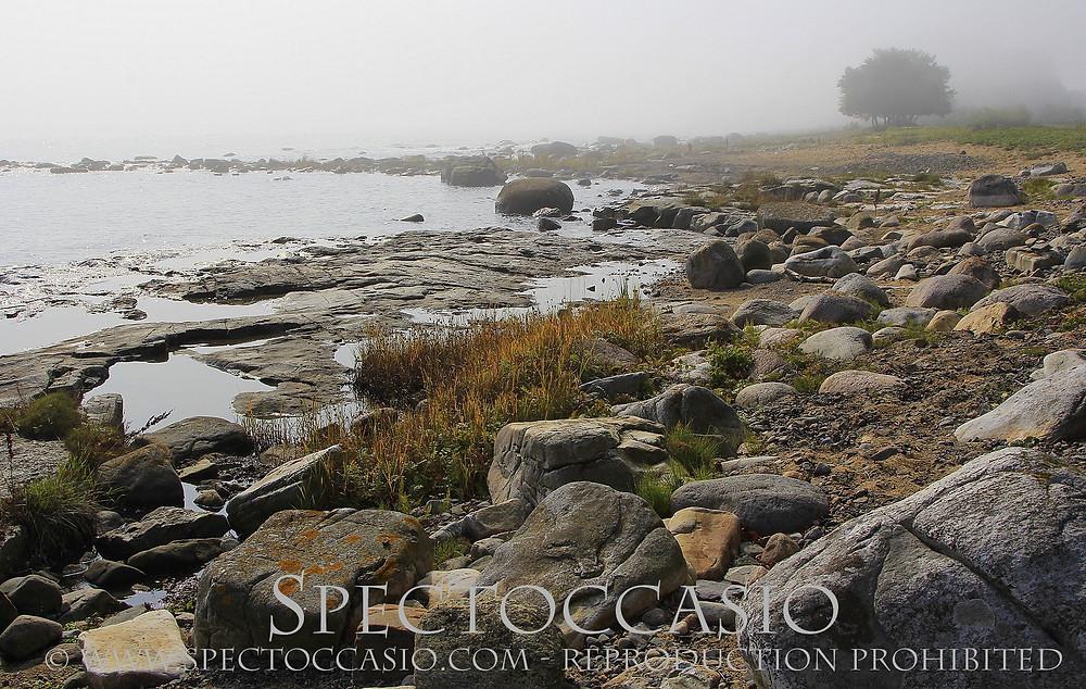Sydkusten Skåne Simris Strandäng - naturreservat med flera naturtyper