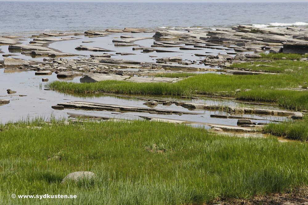 Sydkusten Skåne kvarnsten Gislövshammar strand
