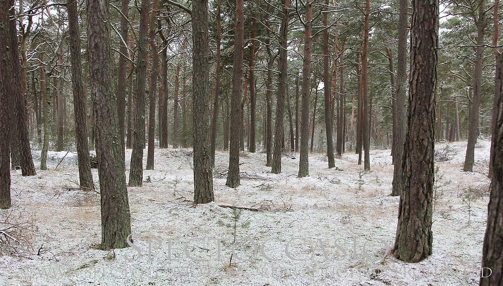 Sydkusten, Skåne, Ystad, Sandskogen, motionsspår, elljusspår, promenad, utegym, barn, aktivitet, ridspår