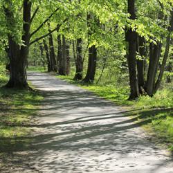 Sydkusten Skåne Svaneholm skogen