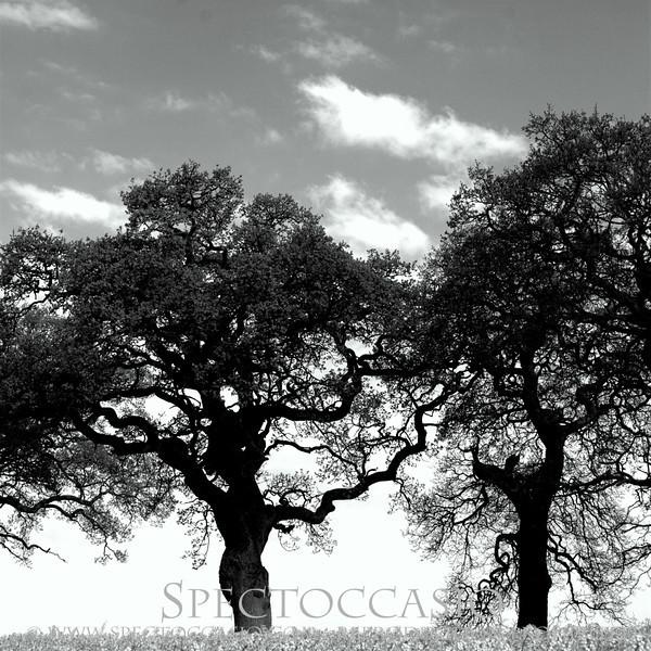 Sydkusten Skåne Svarte Natur Ek Träd Historia Cykelväg