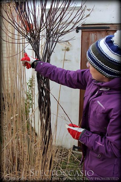 När flätningen är klar klipper man av grenarna till samma höjd med en sekatör och knyter ihop ändarna.