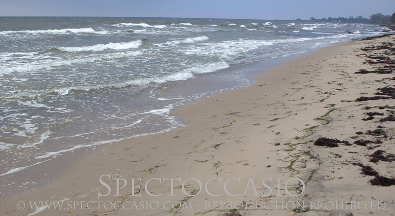 Sydkusten.se höst promenad stranden Mossbystrand Spectoccasio fotograf