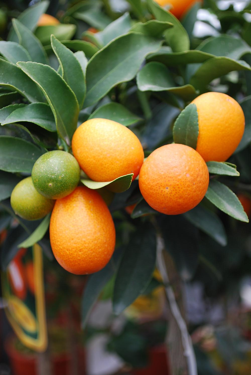 Medelhavsväxter och utemiljö - Temahelg för trädgårdsintresserade hos Gunnebo på Sydkusten