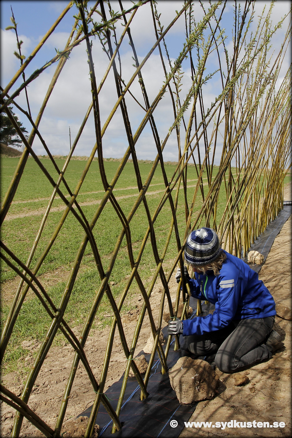 Pillehill Brasserie Little Gardens willow fence weaving Skåne