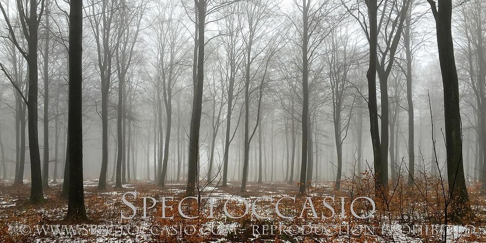 Sydkusten Skåne - njut av bokskogen under stilla dimmiga januari dagar!