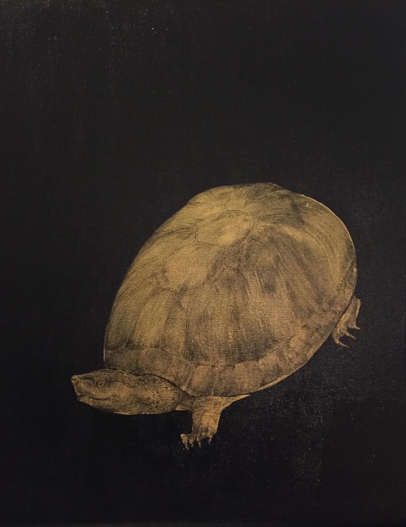 Eastern Musk Turtle