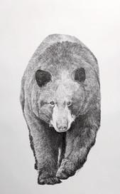 Bear Paw Lake