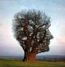 arbre de la connaissance.jpg