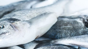 Climate change and fisheries in Iceland