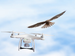 Party Fowl:  Birds and Drones Don't Mix