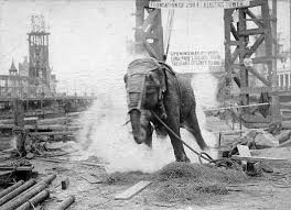 CINEMA | O elefante e a cadeira elétrica