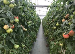 農業で稼ぐのは難しくない その8 最近の話