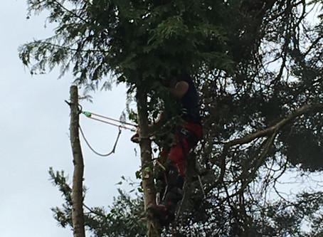 A Tree-mendous Week!
