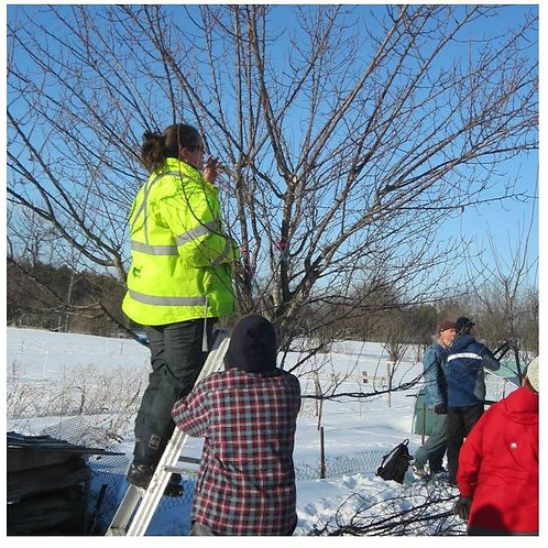 Fruit Tree Pruning- North Gower