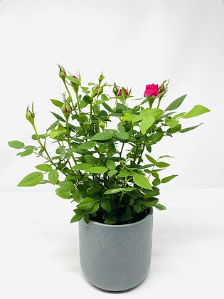 Star ⭐️ ceramic with flower 06