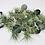Thumbnail: Small Airplants 01