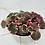 Thumbnail: Begonia Strawberry Variegated
