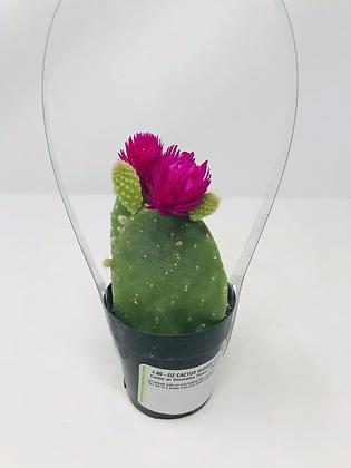 Cactus 07 with Deco Flower