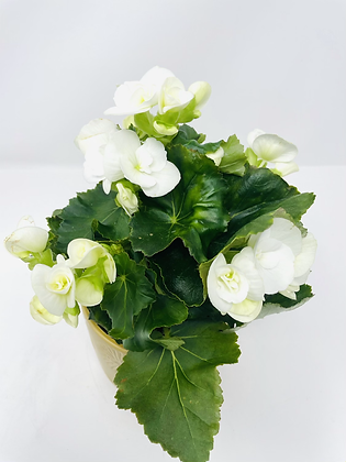 Star ⭐️ ceramic with flower 07