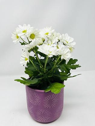 Star ⭐️ ceramic with flower 03