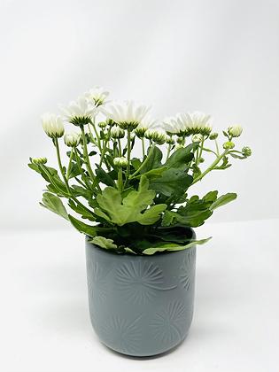 Star ⭐️ ceramic with flower 05