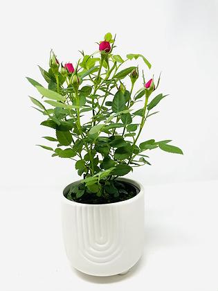 Arc Ceramic with flower  🌸 01
