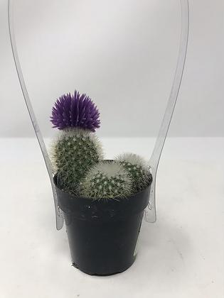 Cactus 04 with Deco Flower