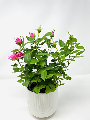 Arc Ceramic with flower 🌸 06