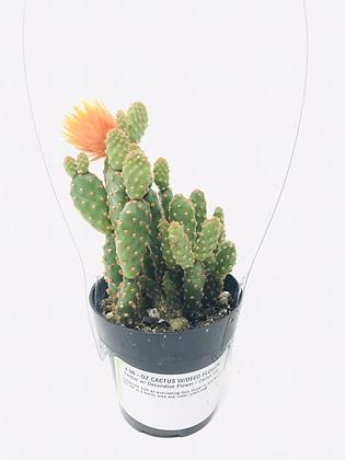 Cactus 06 with Deco Flower