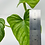 Thumbnail: Philodendron Mamei 2